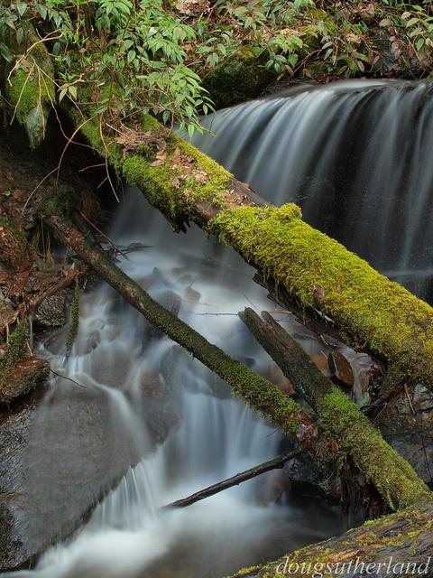 Roadside Cascades in Tremont Great Smoky Mountain National Parkk
