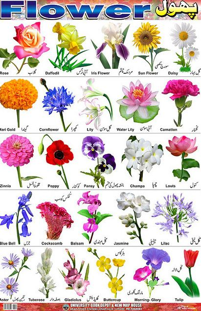 66 Best Images About Bulbs And Pruning On Pinterest