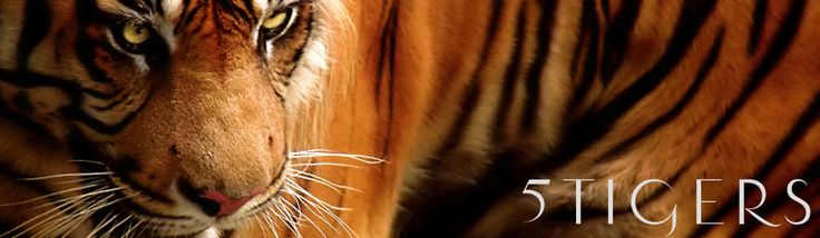 5 Tigers : The Tiger Information Center