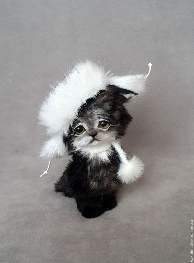 Купить котенок тедди Семен - серый, котенок, кот, котик, кошка, милый, тедди, игрушка