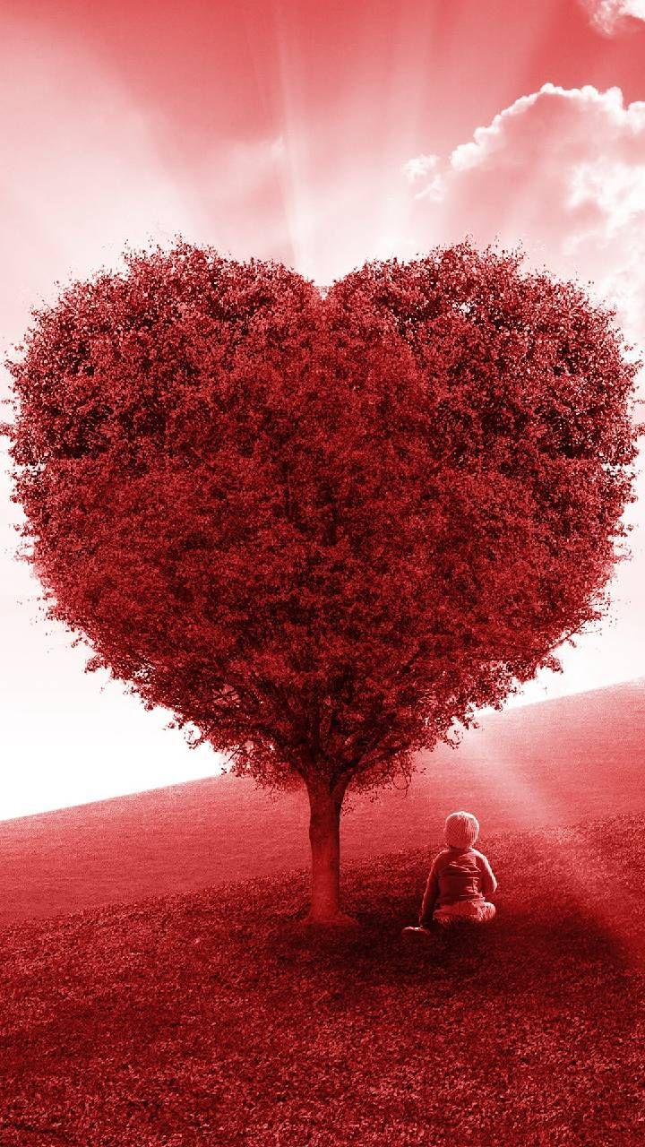 Download Red Love Heart Tree Wallpaper By Pramucc