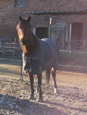 Horseware Rambo Quarterhorse Outdoordecke 200 Gramm 135 130 Quart in Niedersachsen - Lehrte | Pferdesättel gebraucht günstig kaufen | eBay Kleinanzeigen