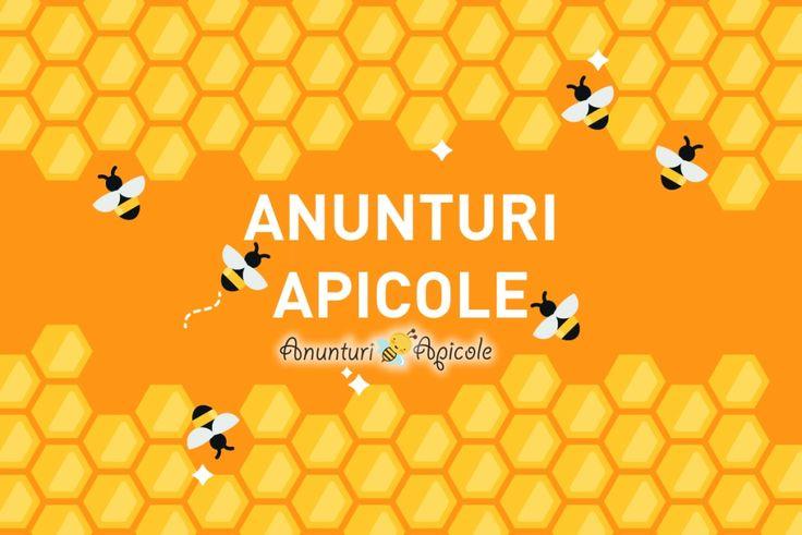 Anunturi Apicole - Apicultura Online