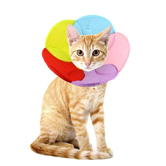 Pet By Annaeye Recovery Pet Cone E Collar For Cats And Small Dogs Comfortabe Flower Pattern Elizabethan Collar Rainbow S Pets Small Dogs Dogs