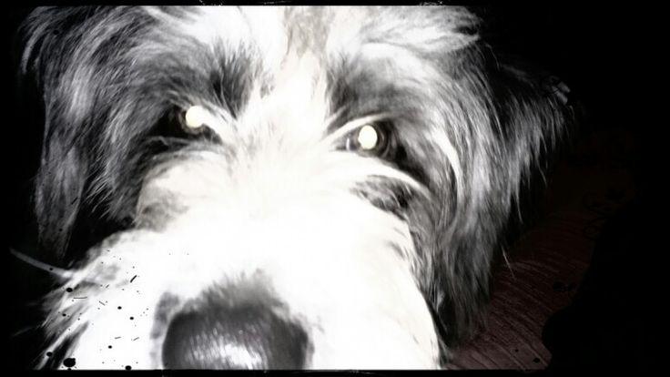 Pepo! Mi perro dinámita