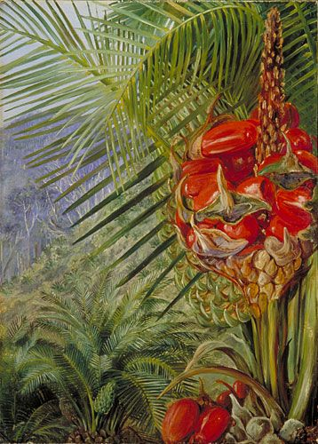 Ripe Cone If A Cycad, Illawarra, NSW, Australia By Marianne North Plants:  Botanical IllustrationBotanical DrawingsBotanical PrintsTropical ...