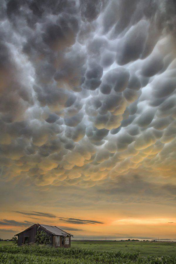 Gorgeous mammatus clouds over Weir, Texas ++