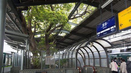 Nella stazione-albero giapponese, dove la natura si è opposta al cemento