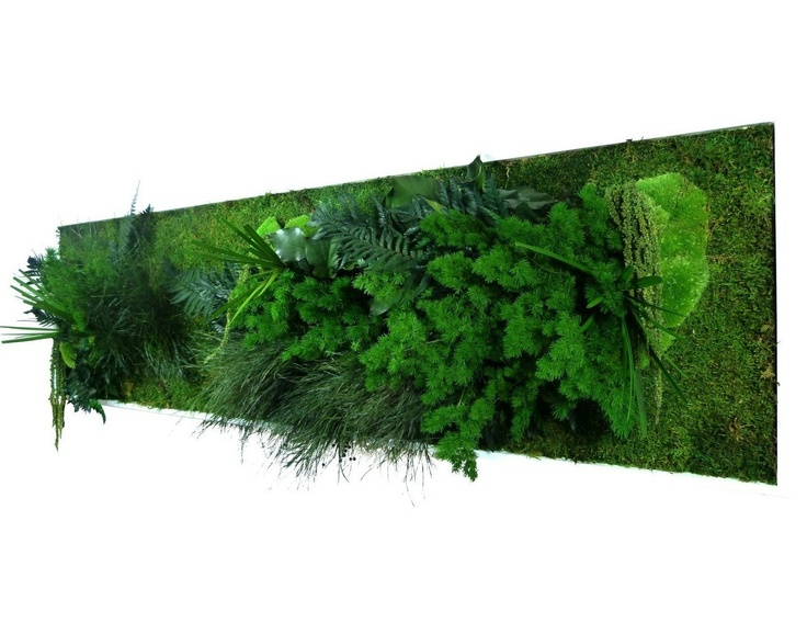 17 best ideas about tableau vegetal on pinterest cadre for Cadre vegetal mural