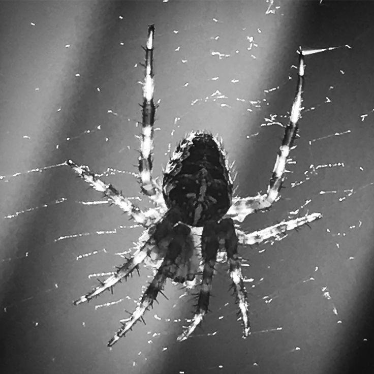 Spider 🕷
