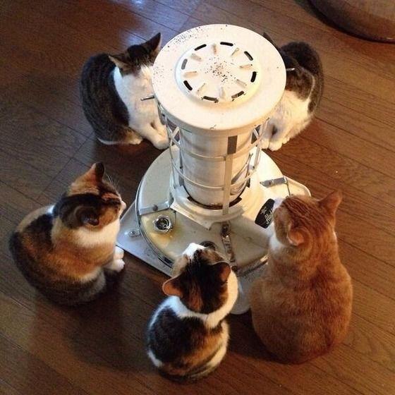 【画像あり】 猫あるある可愛すぎワロタw ストーブの前で待機する猫wwwwwwwwwwwww : アルファルファモザイク