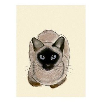 Siamese Cat Art Blue Eyes 4 X 6 print of cat by matouenpeluche