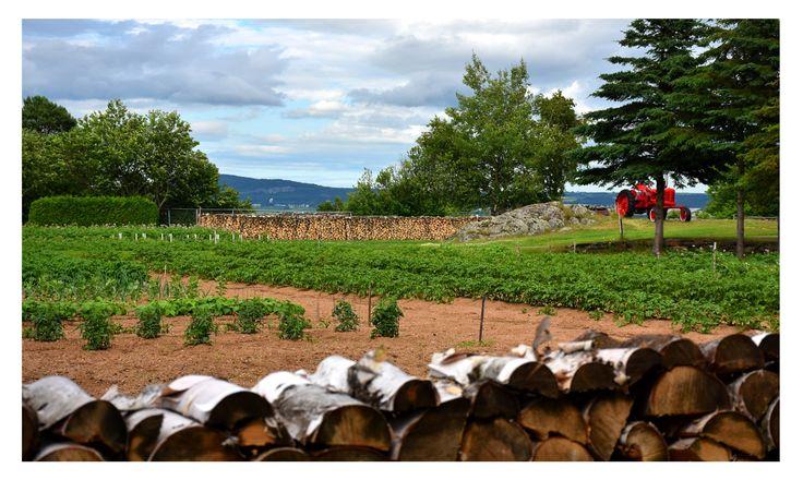 Jardin voisin de la galerie d'art Quai n° 3, à Kamouraska, l'un des plus beaux villages du Québec.