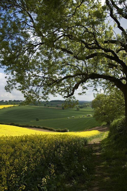 Woodborough, Nottinghamshire, England (by NutGoneFlake)