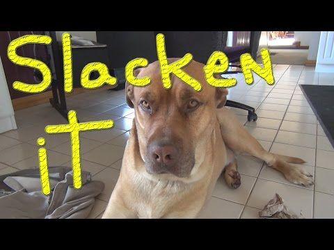 Slackers Today #146 Ducks For The Homeless - YouTube