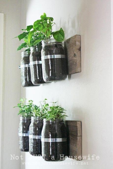 Pots de confitures accrochés au mur pour cultiver, basilic, thym et persil...