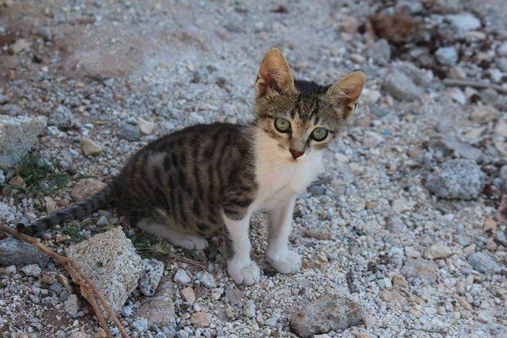 Animals and particularly cats have a very special place at Al Salam school! ----------- Les animaux et particulièrement les chats ont une place très spéciale à l'École Al Salam!