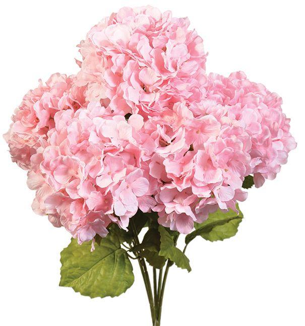Hydrangea Bush X5 21 Choose From 6 Colors Arboles