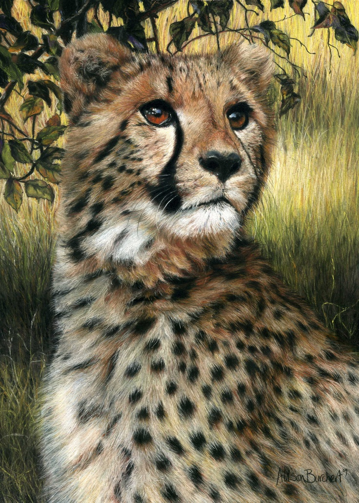 Artists Paintings Of Animals