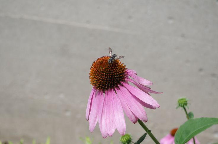 Flying creatures of all kinds enjoy Ruthven Park's brightly coloured gardens.