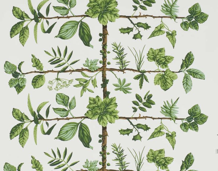 "'Espalier"" botanical wallpaper by Pierre Frey"