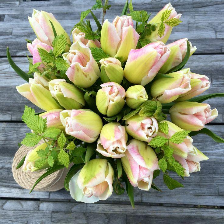 Organic tulips, First Class, Vildevioler.dk