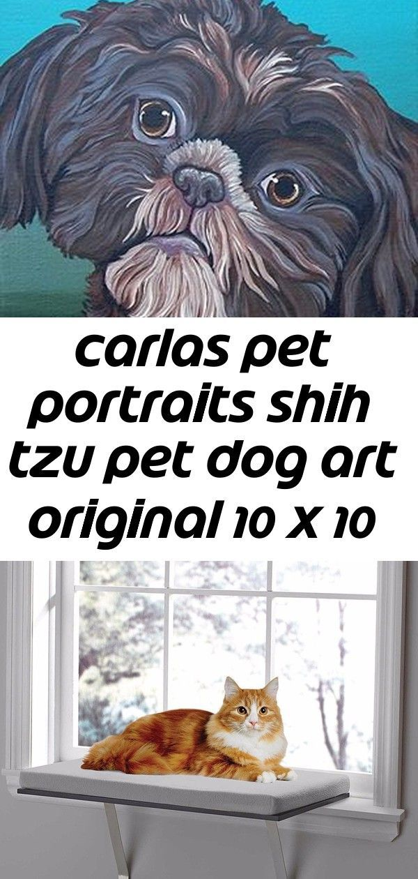 Carlas Pet Portraits Shih Tzu Pet Dog Art Original 10 X 10