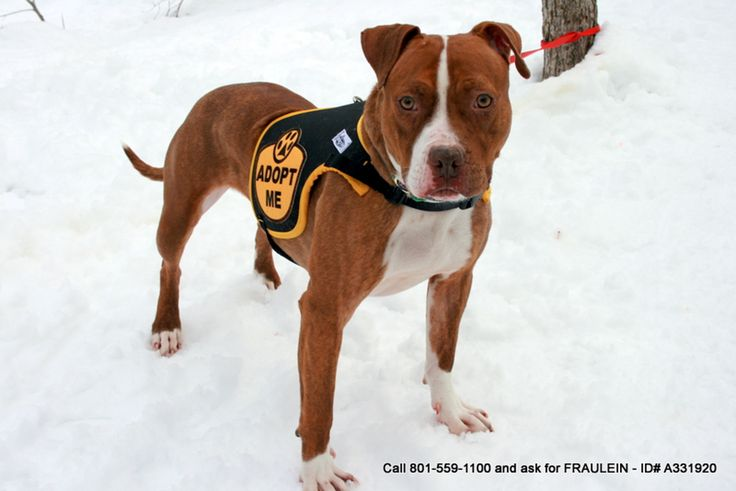 10 Facts About Breed-Specific Legislation and How You Can Help Stop It. The Humane Society of the U.S., the ASPCA, the United Kennel Club, the American Animal Hospital Association, the American Kennel Club, Best Friends Animal Society, the CDC, even the Obama administration (and so many more) is against BSL.