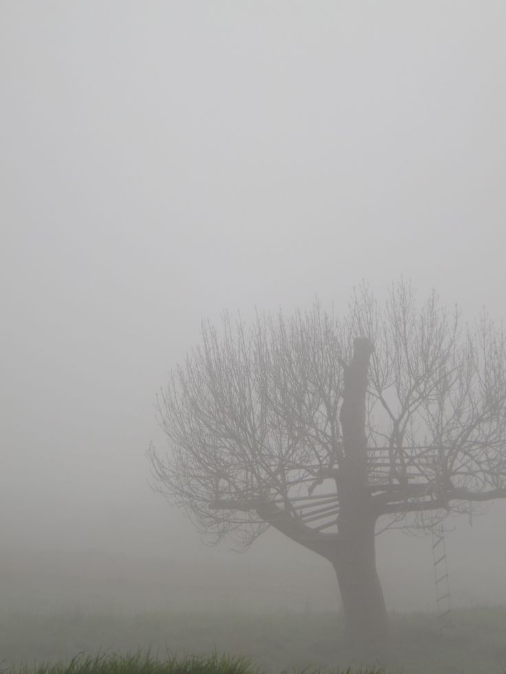 The view from my house on a foggy morning!