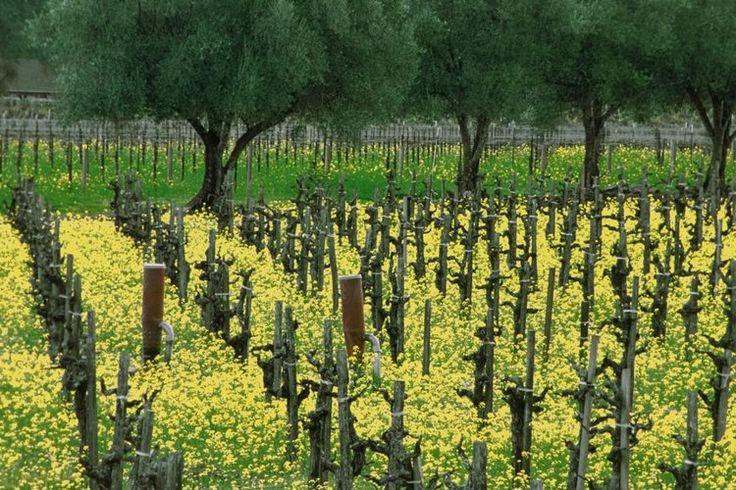 Los beneficios del aceite de semilla de uva en la piel y las pestañas | Muy Fitness