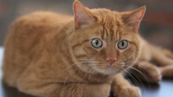 We Surprised This Cat With A Check For $10,000, And He Couldn't Care Less - Click, watch, share @clickhole