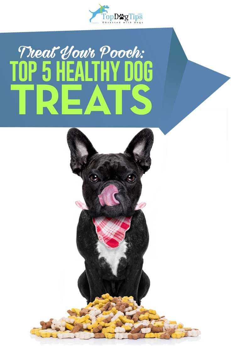 2016 Top 5 Best Healthy Dog Treats With Natural Ingredients. Similar to us humans loving snacks in between meals, our companions love occasional tasty dog treats. But when it comes to treats for dogs, there are two important things to keep in mind: it's better if they're low calorie and made with wholesome ingredients. Below is a list of five best healthy dog treats only with all natural ingredients for health-conscious pet parents. #dog #dogtreats #healthy #dogs #treats