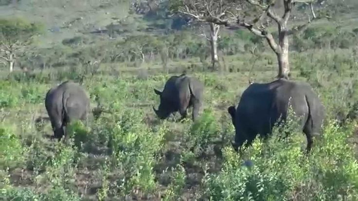 Tim Brown Tours 3 Day tour of Hluhluwe-iMfolozi Game reserve