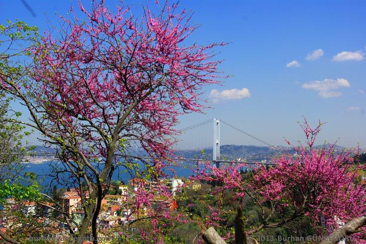 In April, Judas trees ( Erguvan) and Bosphorus - Istanbul