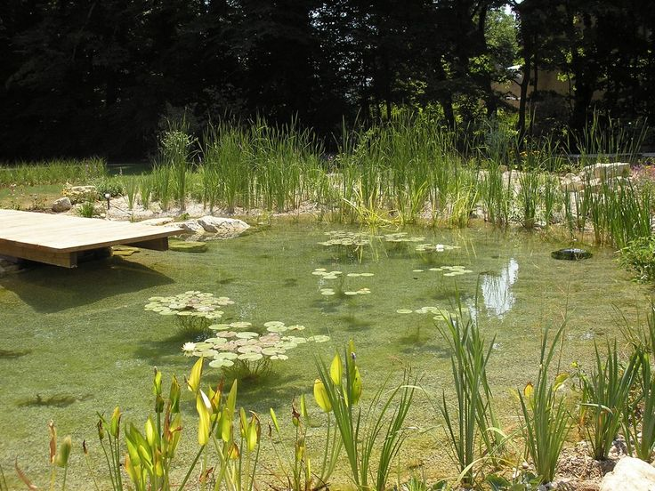 51 best natural swimming pools images on pinterest for Koi pond natural swimming pool