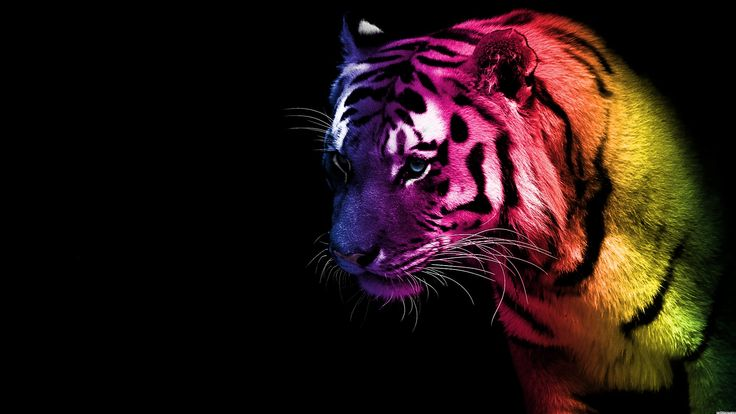 Tiger  animals, color, tiger, wallpaper  Full HD Best Wallpaper