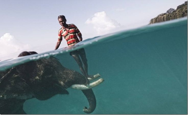 Amazing Relationship Between An Elephant and A Man.