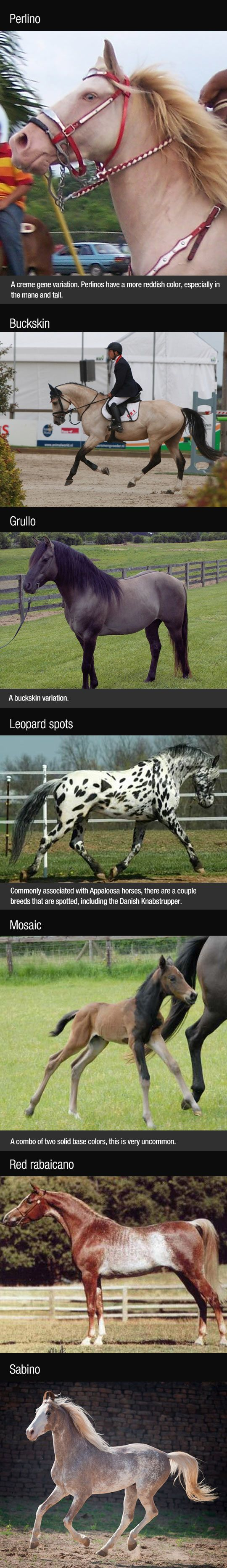 Breathtaking Horse Colors/ please mosaic or grullo but that mosaic!