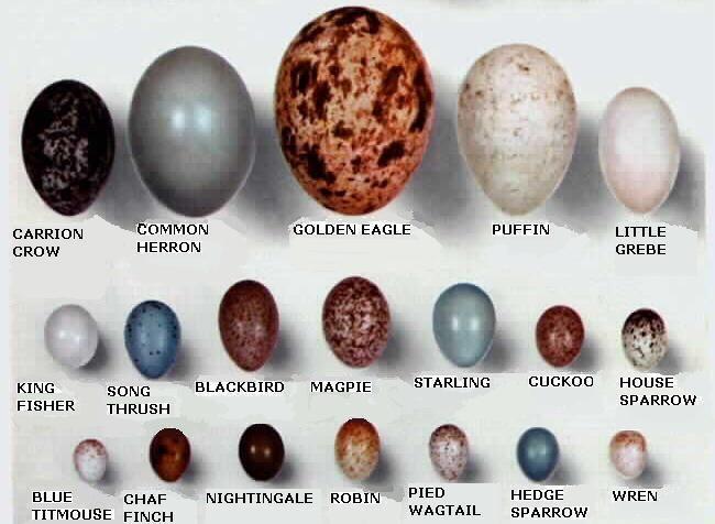 Garden Birds Eggs Garden Ftempo