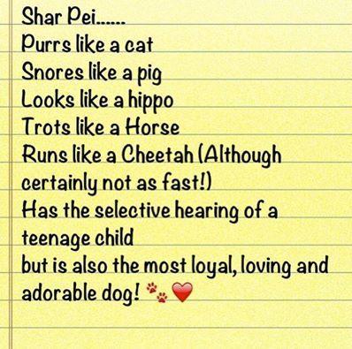 #love #sharpei #dogs #likeapig #nothearing