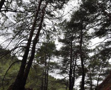 Πηγή:  Chios Hiking - Ένα ακόμα βήμα http://bit.ly/2ynsjhZ Ένας ακόμα καθαρισμός μία ακόμα συντήρηση παλιάς ξεχασμένης από τον κόσμο πανέμορφης ιστορικής διαδρομής. Μέσα σε ένα καταπράσινο τοπίο απ το οποίο δεν λείπουν τα αγροτικά και ποιμενικά μνημεία παλιότερων εποχών δίπλα σε έναν ξεροπόταμο και σε εντυπωσιακούς γεωλογικούς σχηματισμούς ένα μονοπάτι που πριν την αυτοκίνηση αποτελούσε την κύρια οδό για τους αγωγιάτες με προορισμό τη Βόρεια Χίο βήμα βήμα καθαρίζεται και αναδεικνύεται.  Το…