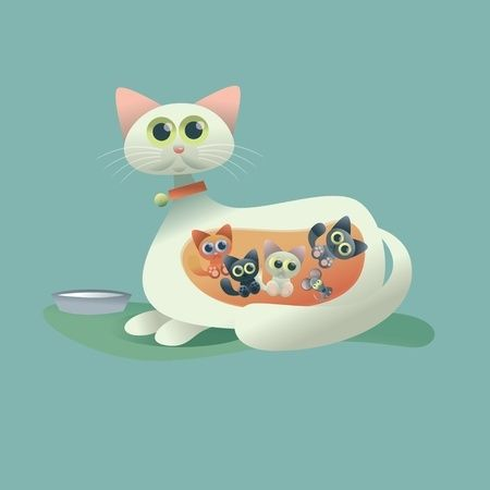 Cat Pregnancy : signs that your cat is pregnant. If you love cats, you'll Like our FB page https://www.facebook.com/felinesmart/