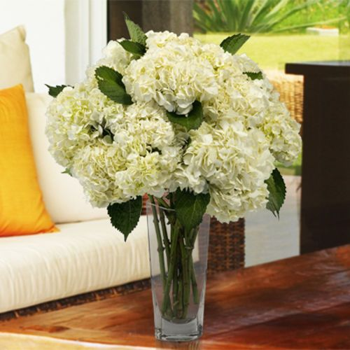 Best costco flowers ideas on pinterest budget