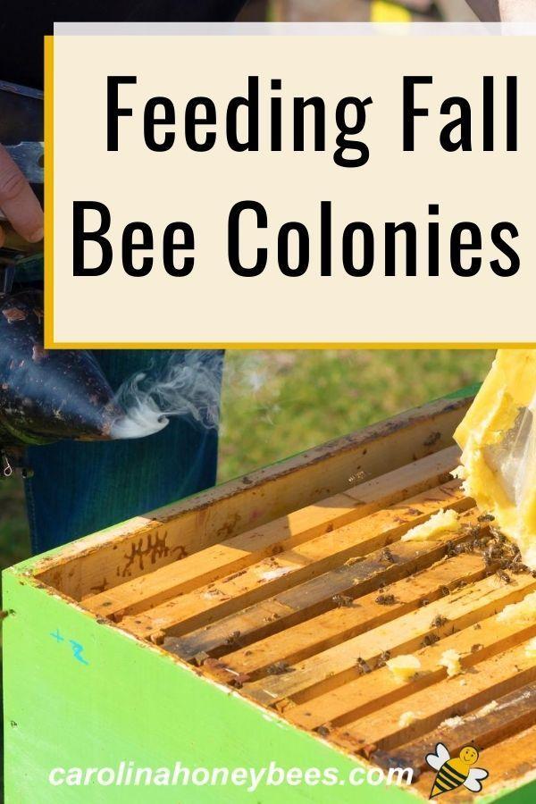 Feeding Bees In Fall Saves Hives Carolina Honeybees In 2020 Feeding Bees Bee Colony Bee Keeping