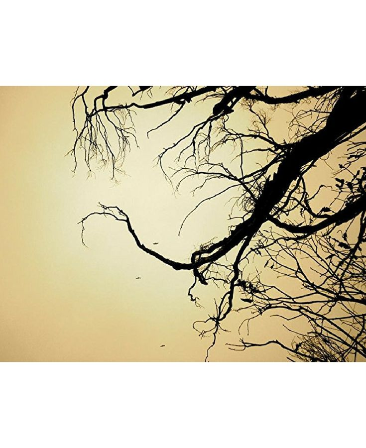 A creative work from Los Angeles artist Elan Toby, 'Branches' is a mood piece inspired by old silent movies. Proceeds from 'Branches' will help fund art education in inner city elementary and middle schools in Los Angeles via P.S. Arts. $40