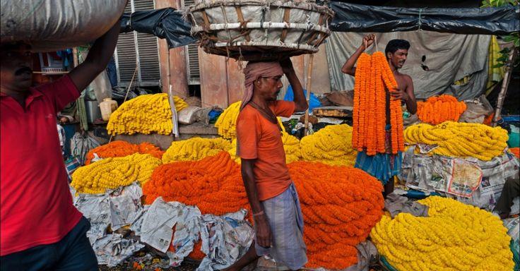 O famoso mercado de flores Malik Ghat atrai até 2.000 comerciantes com inúmeras flores arranjadas em guirlandas gigantes. A cidade de Calcutá contam com mais de 16 milhões de habitantes, no estado de Bengala Ocidental, Índia