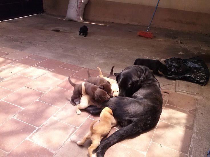 los perritos con un mes de edad