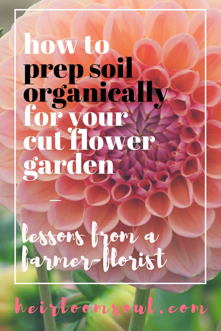 How to Prep Soil for a Cut Flower Garden - Peach Dahlias - Wedding Florist in Buffalo, NY - Heirloom Soul Florals