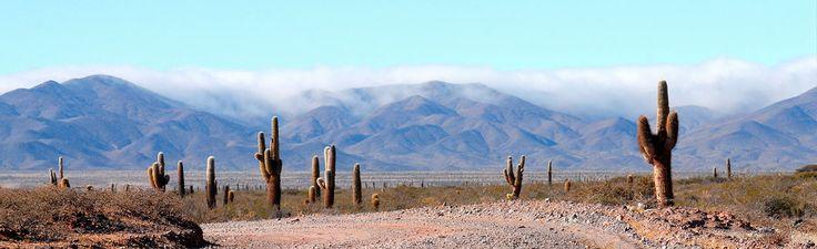 Parque Nacional Los Cardones.                       ph: Gri Moreno