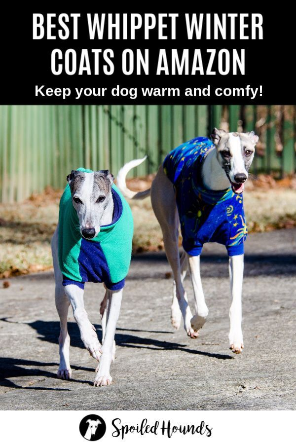 Best Whippet Coats For Winter On Amazon Spoiled Hounds Whippet Waterproof Dog Coats Dog Winter Coat